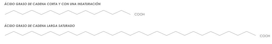 Cadenas de ácido graso