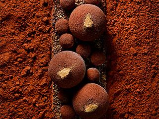 tronco de trufa de chocolate